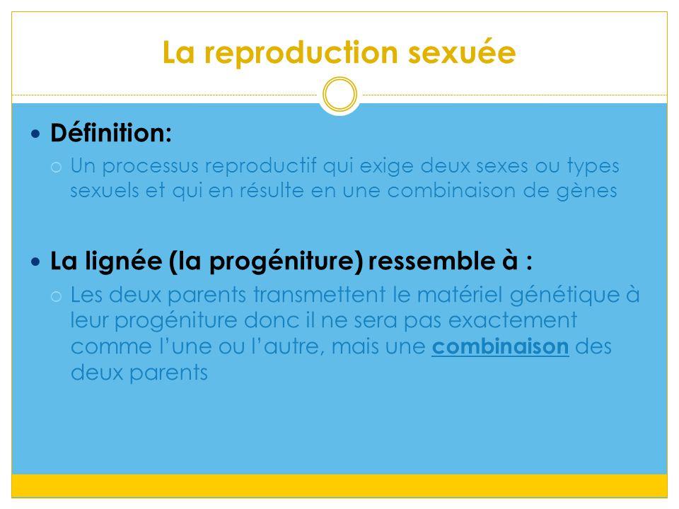La reproduction sexuée Définition:  Un processus reproductif qui exige deux sexes ou types sexuels et qui en résulte en une combinaison de gènes La lignée (la progéniture) ressemble à :  Les deux parents transmettent le matériel génétique à leur progéniture donc il ne sera pas exactement comme l'une ou l'autre, mais une combinaison des deux parents
