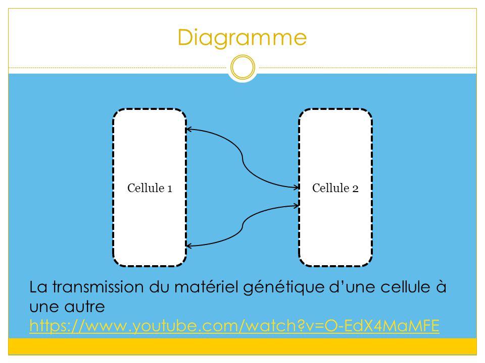 Diagramme Cellule 1Cellule 2 La transmission du matériel génétique d'une cellule à une autre https://www.youtube.com/watch?v=O-EdX4MaMFE