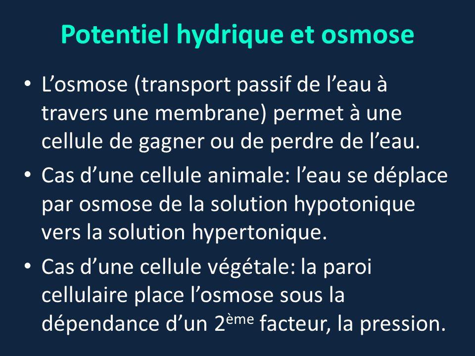 Potentiel hydrique et osmose L'osmose (transport passif de l'eau à travers une membrane) permet à une cellule de gagner ou de perdre de l'eau. Cas d'u