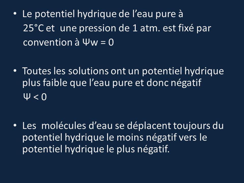 Le potentiel hydrique de l'eau pure à 25°C et une pression de 1 atm. est fixé par convention à Ψw = 0 Toutes les solutions ont un potentiel hydrique p