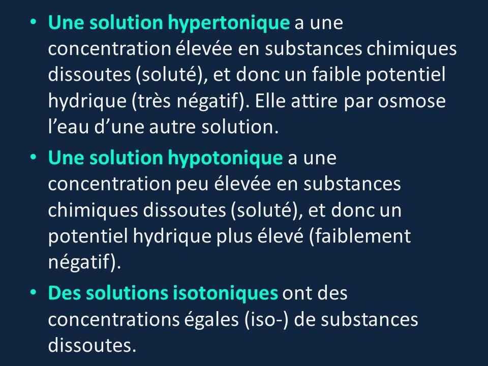 Une solution hypertonique a une concentration élevée en substances chimiques dissoutes (soluté), et donc un faible potentiel hydrique (très négatif).