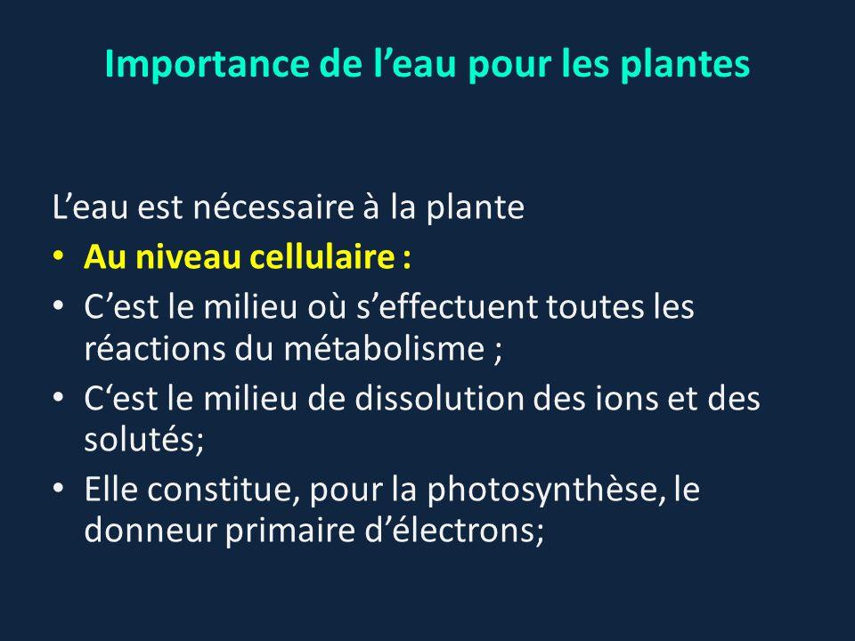 L'eau est nécessaire à la plante Au niveau cellulaire : C'est le milieu où s'effectuent toutes les réactions du métabolisme ; C'est le milieu de disso