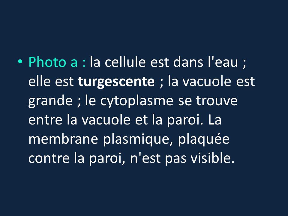 Photo a : la cellule est dans l'eau ; elle est turgescente ; la vacuole est grande ; le cytoplasme se trouve entre la vacuole et la paroi. La membrane