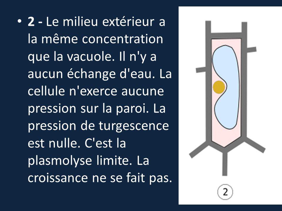 2 - Le milieu extérieur a la même concentration que la vacuole. Il n'y a aucun échange d'eau. La cellule n'exerce aucune pression sur la paroi. La pre