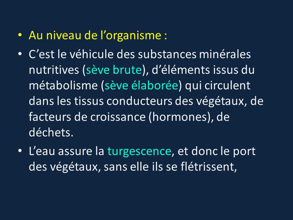 Au niveau de l'organisme : C'est le véhicule des substances minérales nutritives (sève brute), d'éléments issus du métabolisme (sève élaborée) qui cir