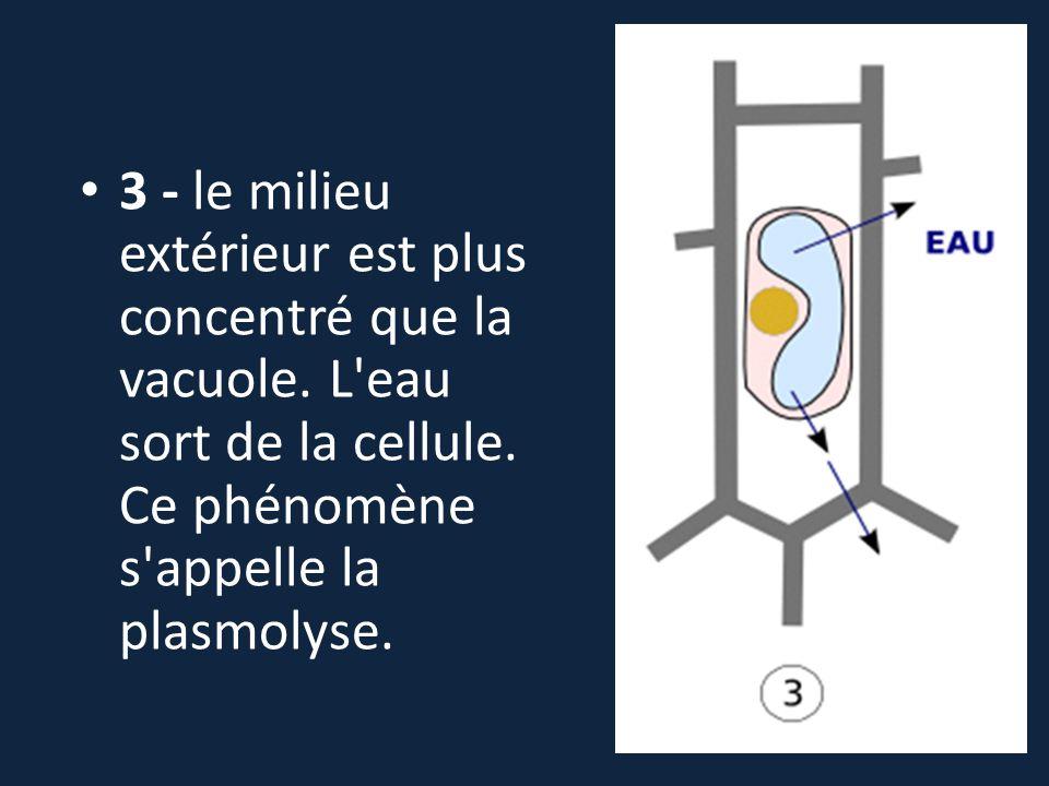 3 - le milieu extérieur est plus concentré que la vacuole. L'eau sort de la cellule. Ce phénomène s'appelle la plasmolyse.