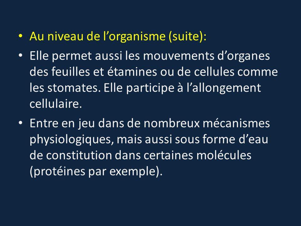 Au niveau de l'organisme (suite): Elle permet aussi les mouvements d'organes des feuilles et étamines ou de cellules comme les stomates. Elle particip