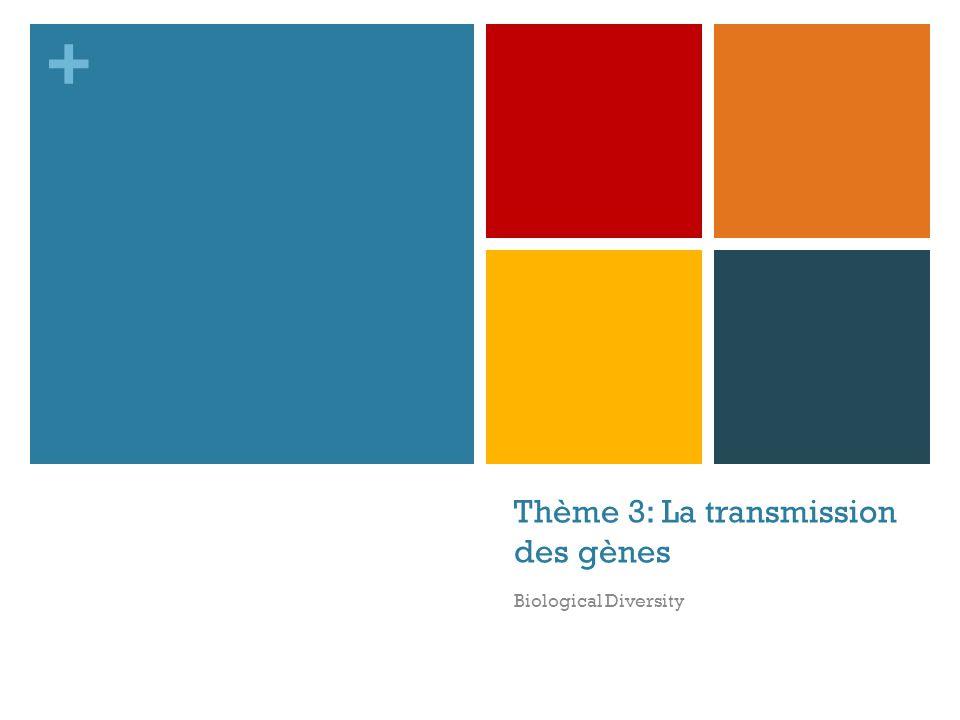 + Thème 3: La transmission des gènes Biological Diversity