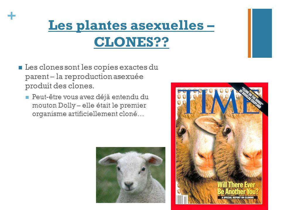 + Les plantes asexuelles – CLONES?? Les clones sont les copies exactes du parent – la reproduction asexuée produit des clones. Peut-être vous avez déj