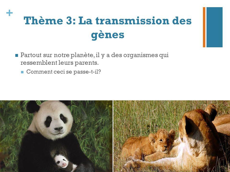 + Thème 3: La transmission des gènes Partout sur notre planète, il y a des organismes qui ressemblent leurs parents. Comment ceci se passe-t-il?