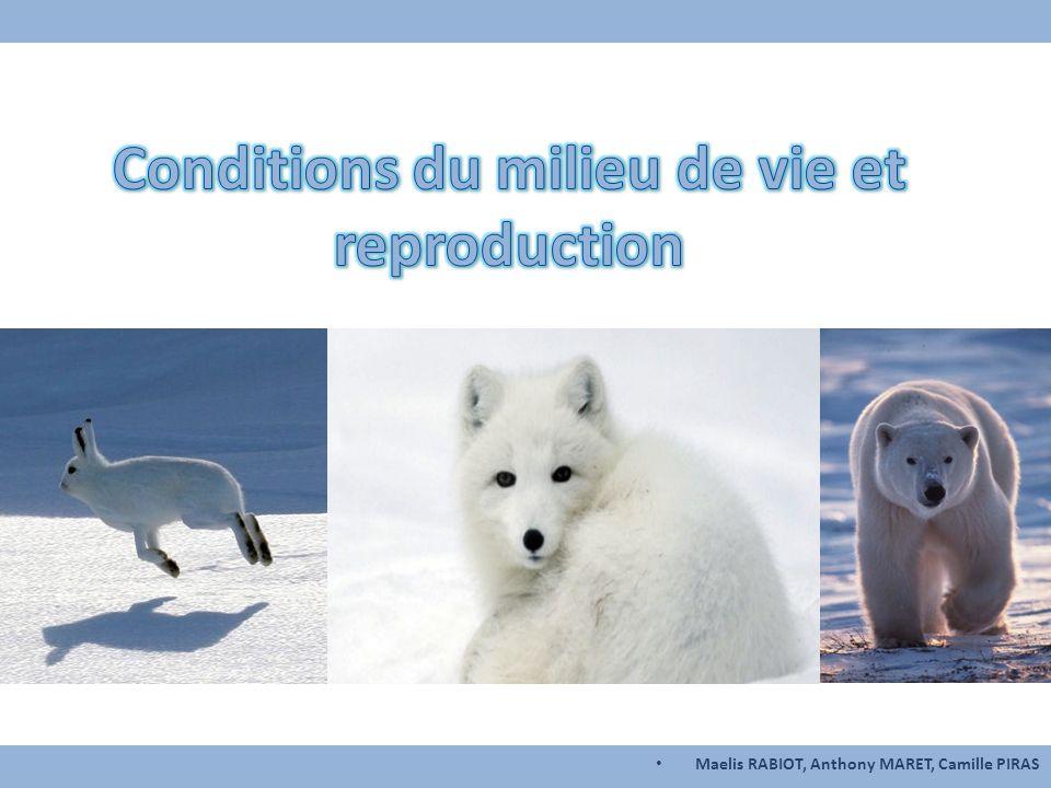 Sommaire Cas d'étude n°1 Le lièvre arctique Cas d'étude n°2 Le renard arctique Cas d'étude n° L'ours blanc Questions Introduction Quand se reproduit-il.