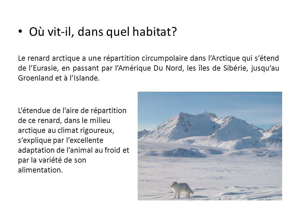 Où vit-il, dans quel habitat? Le renard arctique a une répartition circumpolaire dans l'Arctique qui s'étend de l'Eurasie, en passant par l'Amérique D