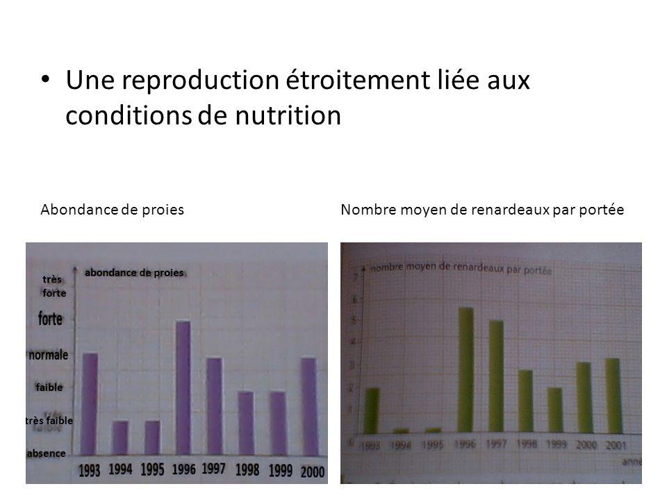 Une reproduction étroitement liée aux conditions de nutrition Abondance de proiesNombre moyen de renardeaux par portée