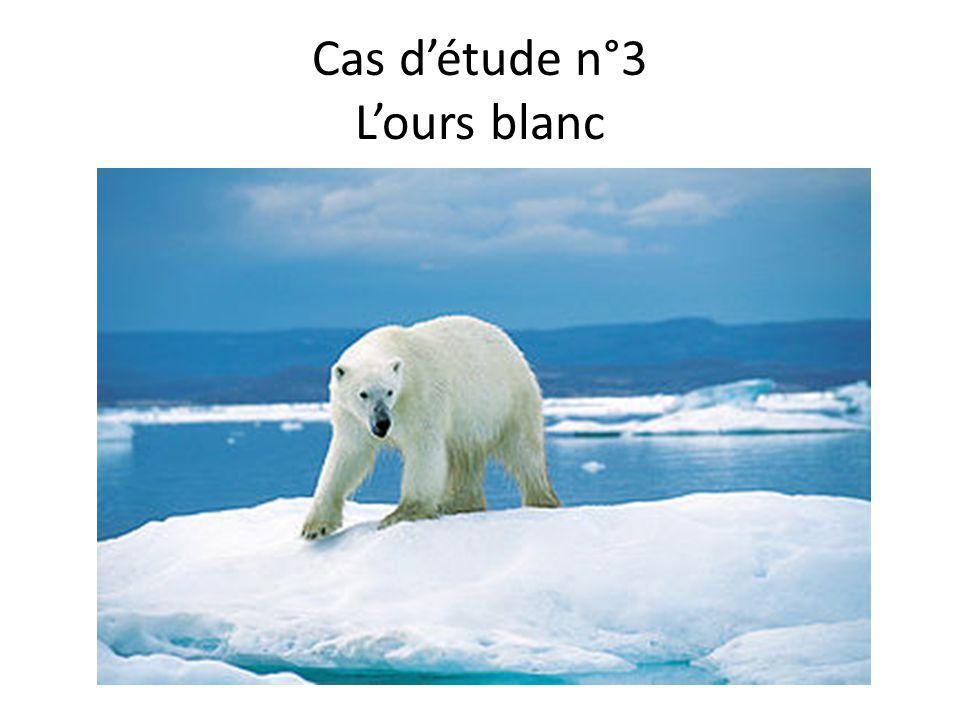 Cas d'étude n°3 L'ours blanc
