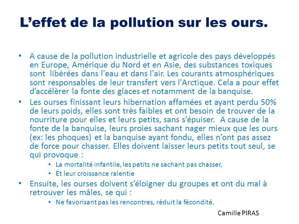 L'effet de la pollution sur les ours. A cause de la pollution industrielle et agricole des pays développés en Europe, Amérique du Nord et en Asie, des