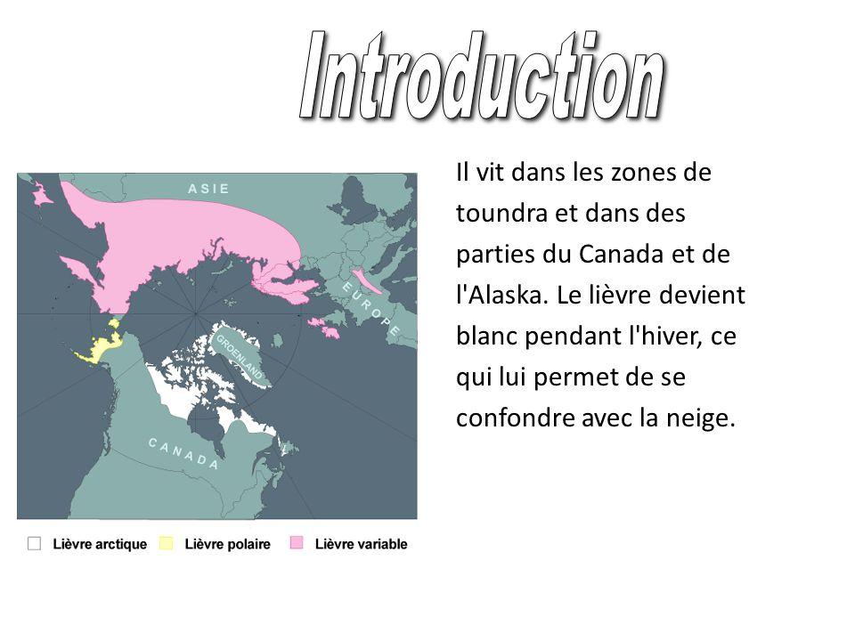 Il vit dans les zones de toundra et dans des parties du Canada et de l'Alaska. Le lièvre devient blanc pendant l'hiver, ce qui lui permet de se confon