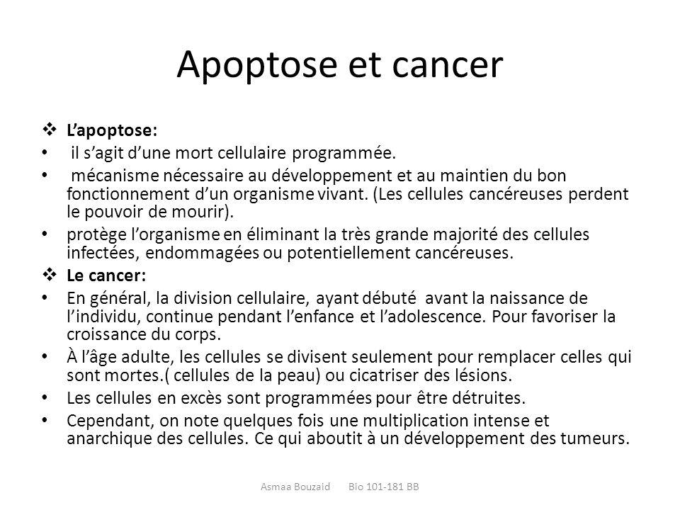 Apoptose et cancer  L'apoptose: il s'agit d'une mort cellulaire programmée. mécanisme nécessaire au développement et au maintien du bon fonctionnemen