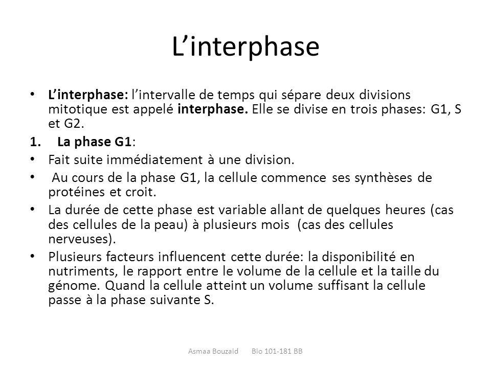 L'interphase L'interphase: l'intervalle de temps qui sépare deux divisions mitotique est appelé interphase. Elle se divise en trois phases: G1, S et G