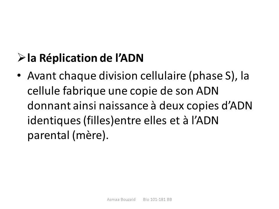  la Réplication de l'ADN Avant chaque division cellulaire (phase S), la cellule fabrique une copie de son ADN donnant ainsi naissance à deux copies d'ADN identiques (filles)entre elles et à l'ADN parental (mère).