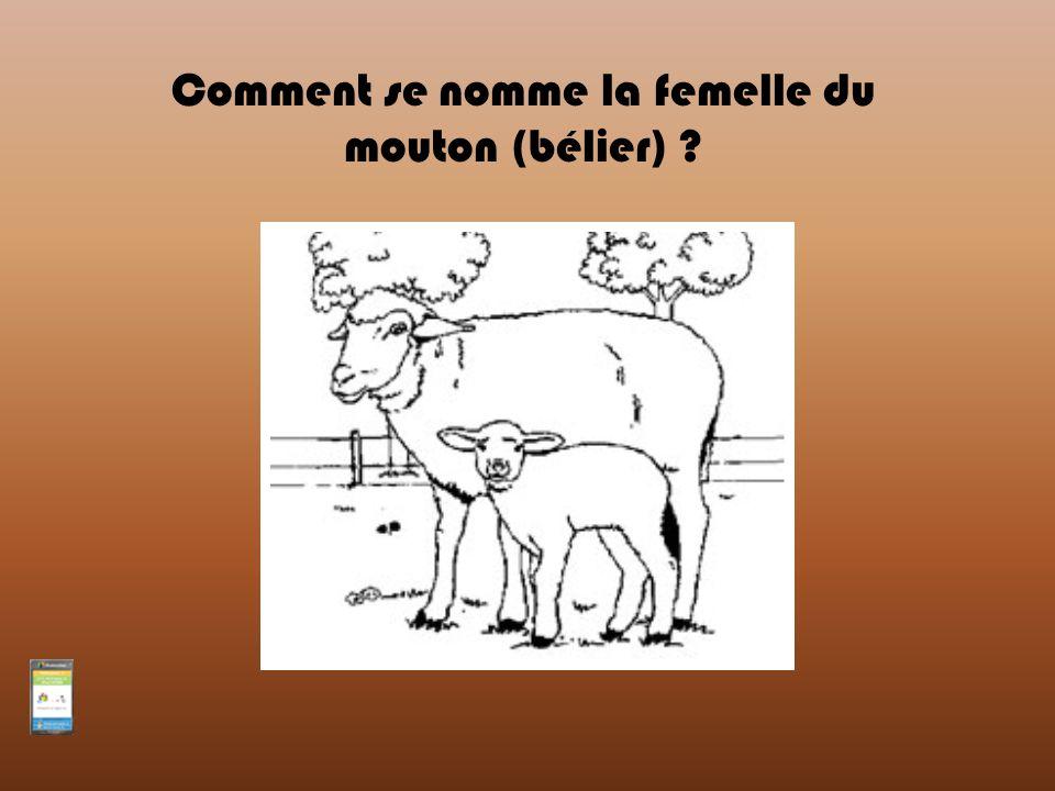 Comment se nomme la femelle du mouton (bélier) ?