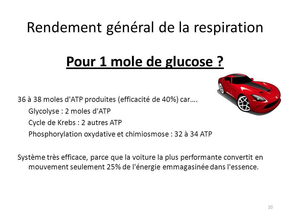 Rendement général de la respiration Pour 1 mole de glucose ? 36 à 38 moles d'ATP produites (efficacité de 40%) car…. Glycolyse : 2 moles d'ATP Cycle d