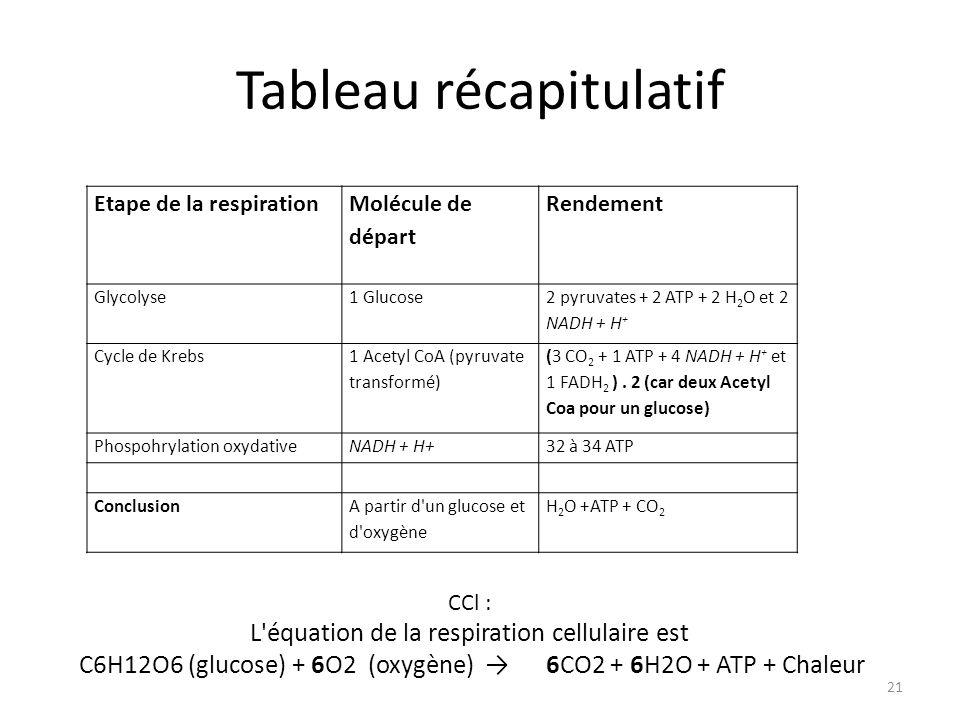 Tableau récapitulatif 21 Etape de la respiration Molécule de départ Rendement Glycolyse1 Glucose 2 pyruvates + 2 ATP + 2 H 2 O et 2 NADH + H + Cycle d