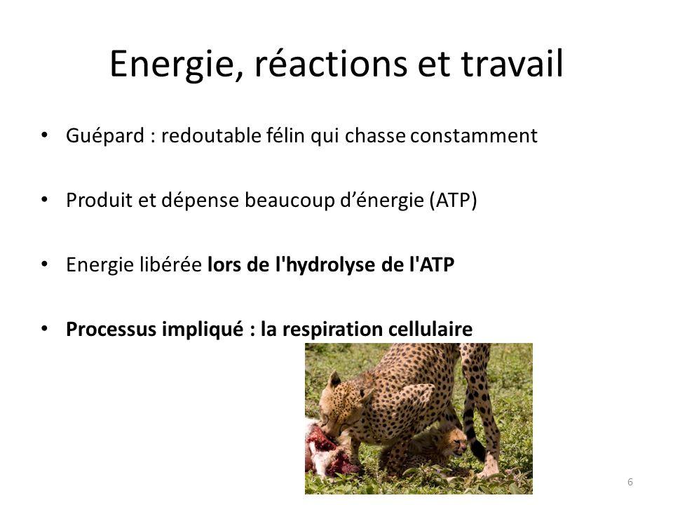 Energie, réactions et travail Guépard : redoutable félin qui chasse constamment Produit et dépense beaucoup d'énergie (ATP) Energie libérée lors de l'