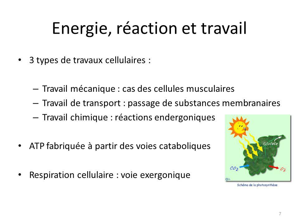 Energie, réaction et travail 3 types de travaux cellulaires : – Travail mécanique : cas des cellules musculaires – Travail de transport : passage de s