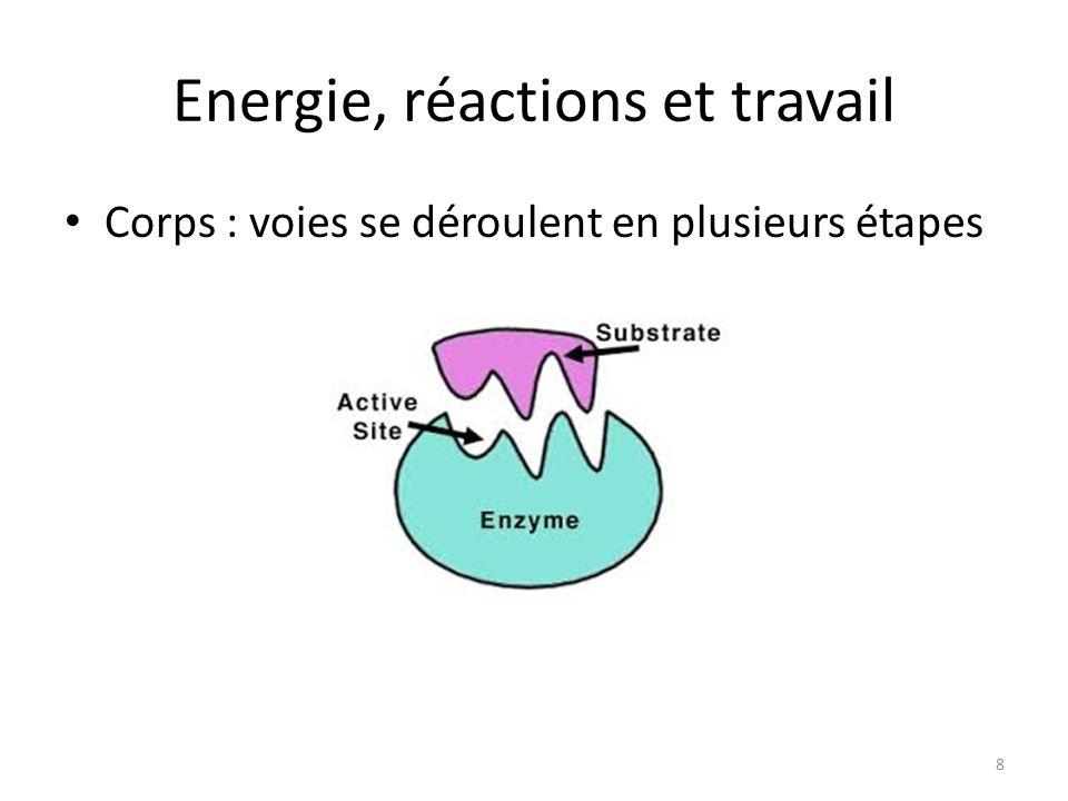 Energie, réactions et travail Corps : voies se déroulent en plusieurs étapes 8