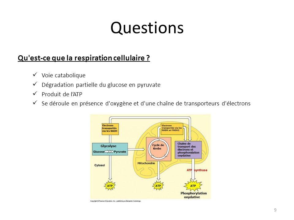 Questions Qu'est-ce que la respiration cellulaire ? Voie catabolique Dégradation partielle du glucose en pyruvate Produit de l'ATP Se déroule en prése