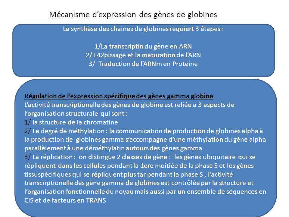 Mécanisme d'expression des gènes de globines La synthèse des chaines de globines requiert 3 étapes : 1/La transcriptin du gène en ARN 2/ L42pissage et