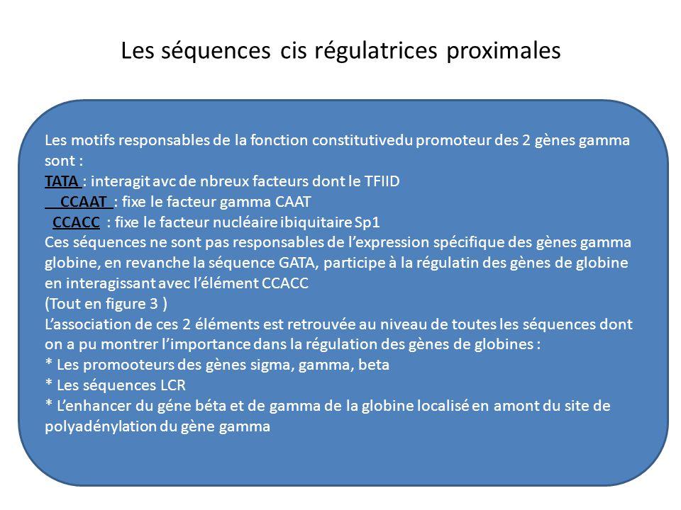 Les séquences cis régulatrices proximales Les motifs responsables de la fonction constitutivedu promoteur des 2 gènes gamma sont : TATA : interagit av