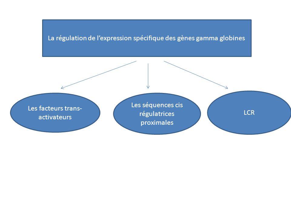 La régulation de l'expression spécifique des gènes gamma globines Les facteurs trans- activateurs Les séquences cis régulatrices proximales LCR