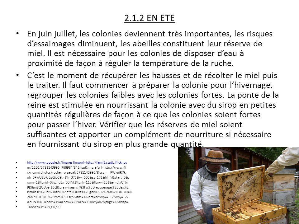 2.1.2 EN ETE En juin juillet, les colonies deviennent très importantes, les risques d'essaimages diminuent, les abeilles constituent leur réserve de m