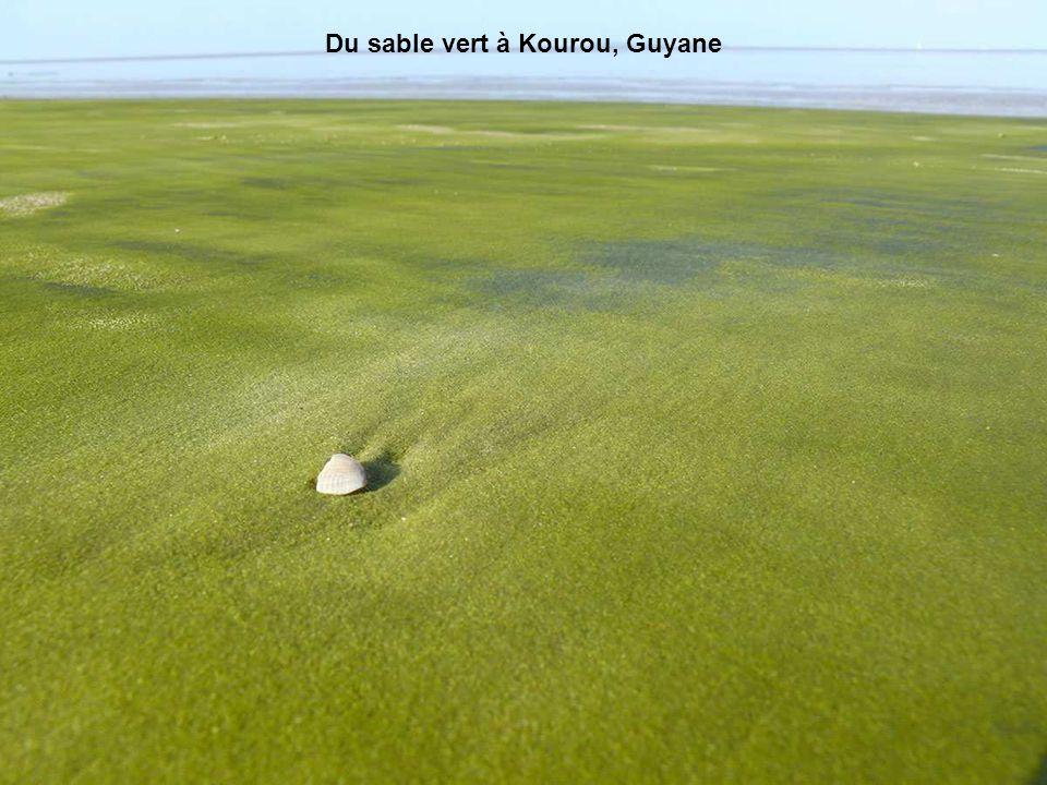Des centaines d'énormes rochers sont éparpillés sur la plage de Koekohe comme des œufs de dragons géants prêts à éclore ! Ces rochers sphériques aurai
