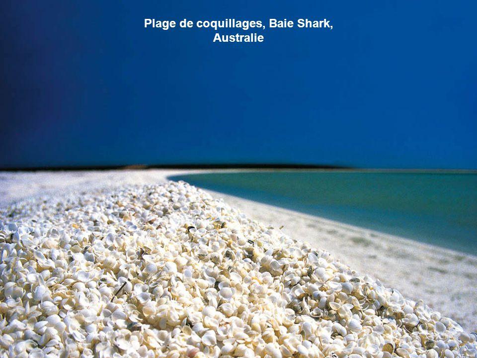 Le sable rouge sur la plage de l'île Rábida a été formé en raison de l'oxydation des dépôts de lave riche en fer, mais il se pourrait que ce soit auss