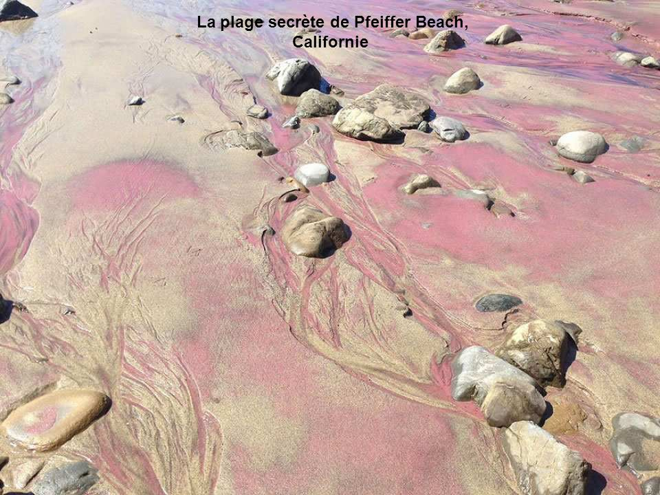 Les eaux proches de Shell Beach sont si salées qu'elles ont permis à la coque de proliférer. C'est cette abondance de mollusques qui inonde les plages