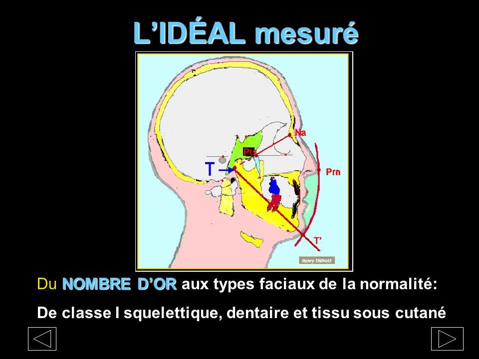 L'IDÉAL mesuré NOMBRE D'OR Du NOMBRE D'OR aux types faciaux de la normalité: De classe I squelettique, dentaire et tissu sous cutané