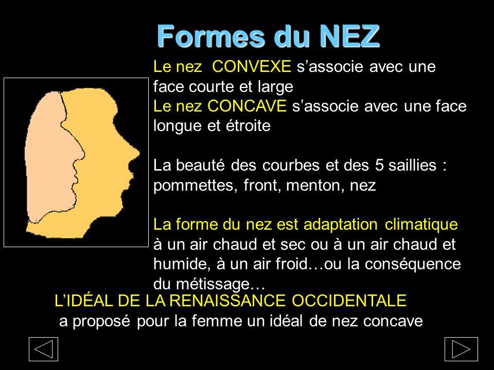Formes du NEZ Le nez CONVEXE s'associe avec une face courte et large Le nez CONCAVE s'associe avec une face longue et étroite La beauté des courbes et des 5 saillies : pommettes, front, menton, nez La forme du nez est adaptation climatique à un air chaud et sec ou à un air chaud et humide, à un air froid…ou la conséquence du métissage… L'IDÉAL DE LA RENAISSANCE OCCIDENTALE a proposé pour la femme un idéal de nez concave