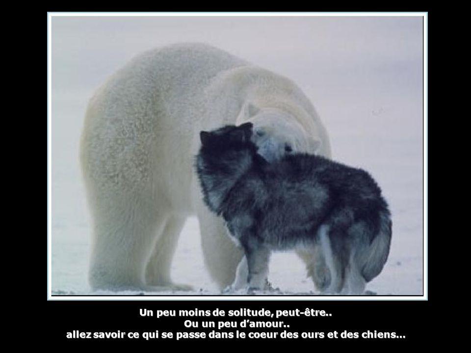 Un peu moins de solitude, peut-être.. Ou un peu d'amour.. Ou un peu d'amour.. allez savoir ce qui se passe dans le coeur des ours et des chiens…