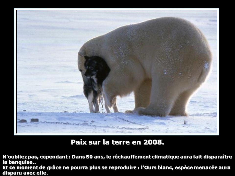 Paix sur la terre en 2008. N'oubliez pas, cependant : Dans 50 ans, le réchauffement climatique aura fait disparaître la banquise.. Et ce moment de grâ