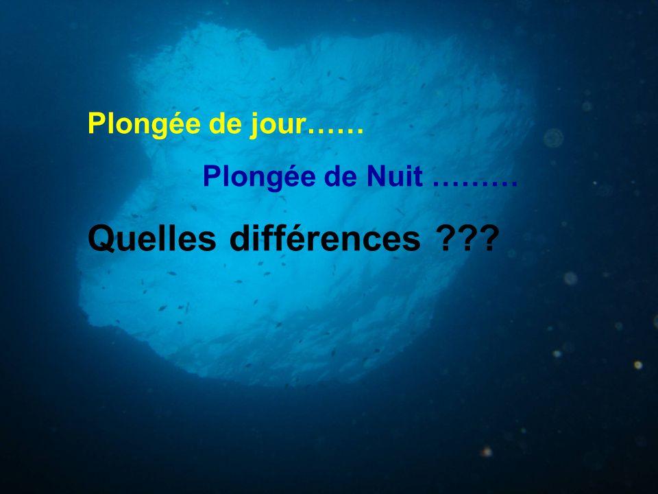 Nous allons parler des différences entre - les plongées de jour et es plongées de nuit Uniquement dans le domaine de la faune et de la flore.