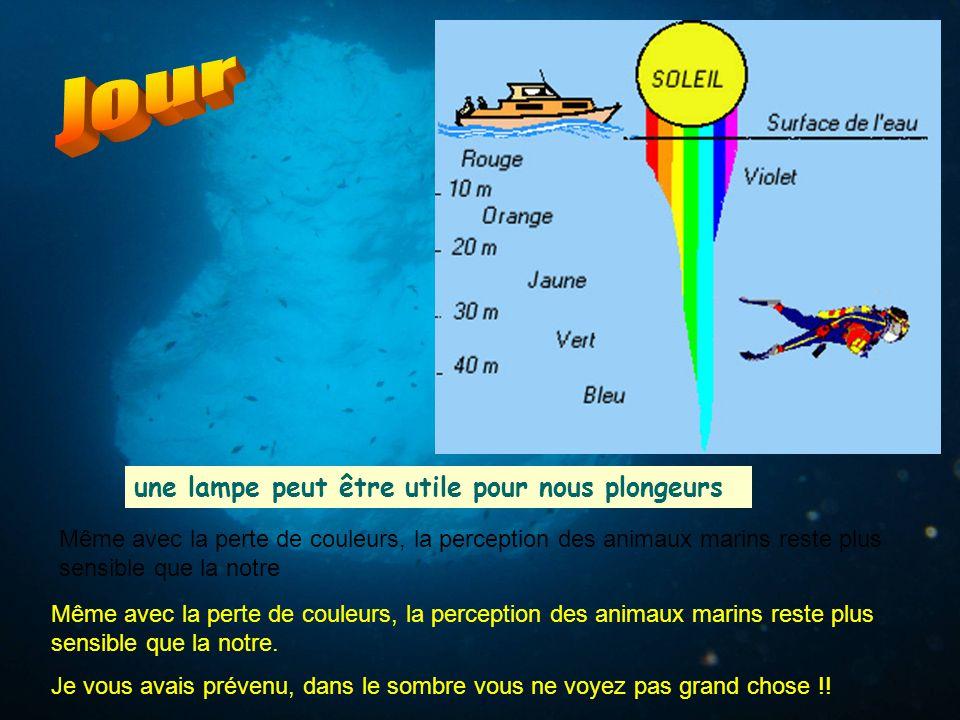 une lampe peut être utile pour nous plongeurs Même avec la perte de couleurs, la perception des animaux marins reste plus sensible que la notre Même a