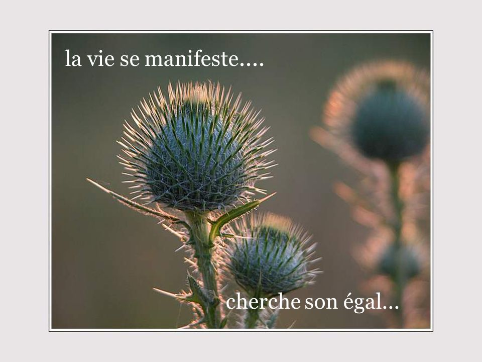 la vie se manifeste.... cherche son égal...