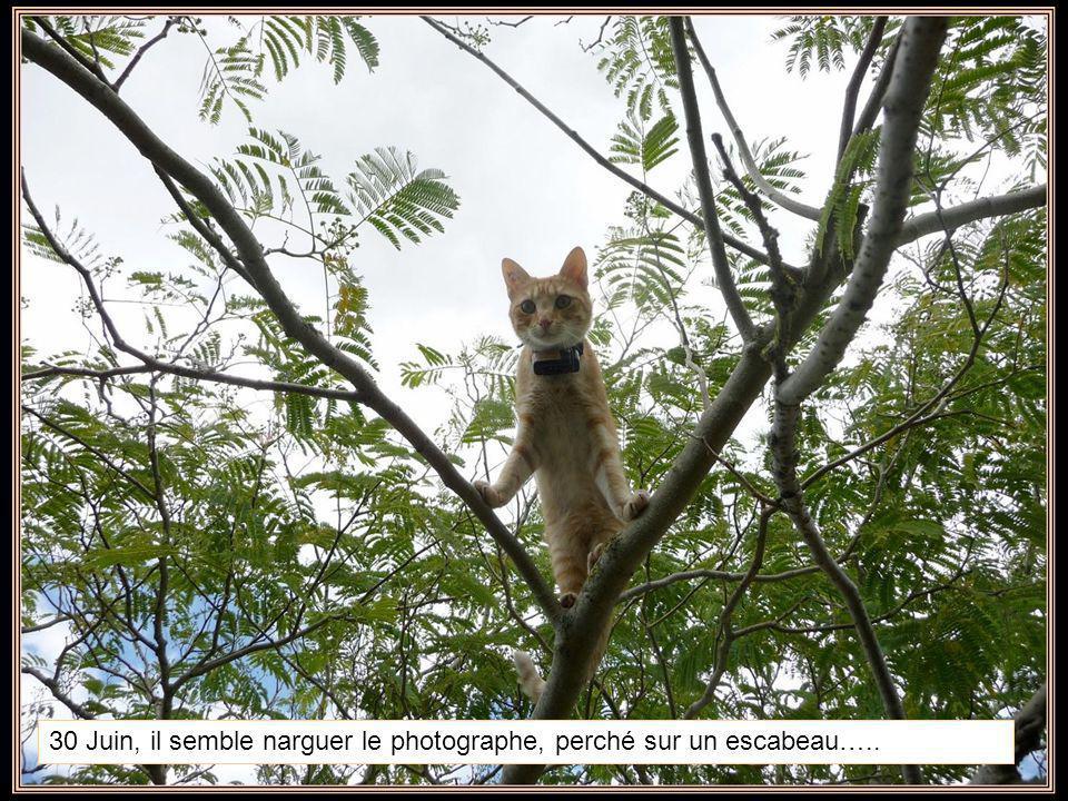 30 Juin, il semble narguer le photographe, perché sur un escabeau…..
