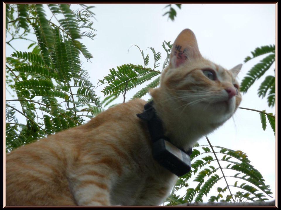 Plusieurs fois par jour, il surveille les allées et venues dans la rue…