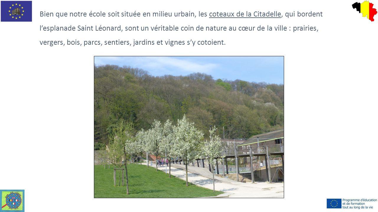 Bien que notre école soit située en milieu urbain, les coteaux de la Citadelle, qui bordent l'esplanade Saint Léonard, sont un véritable coin de natur