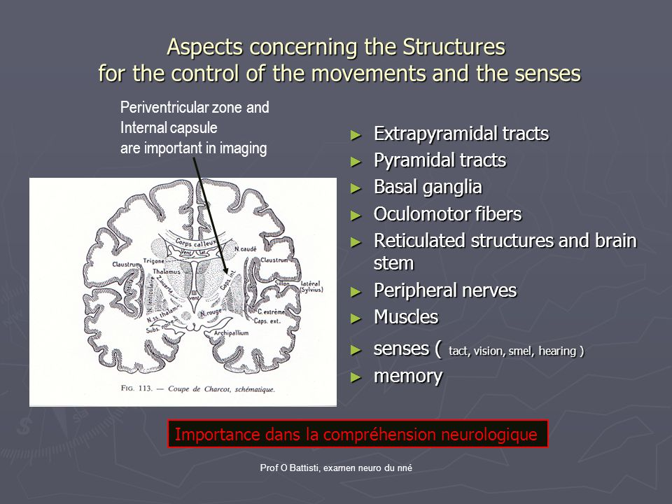Prof O Battisti, examen neuro du nné Aspects concerning the Structures for the control of the movements and the senses ► Extrapyramidal tracts ► Pyram