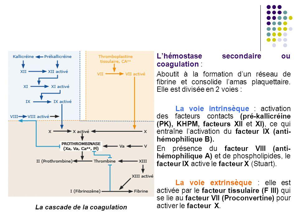 L'hémostase secondaire ou coagulation : Aboutit à la formation d'un réseau de fibrine et consolide l'amas plaquettaire. Elle est divisée en 2 voies :