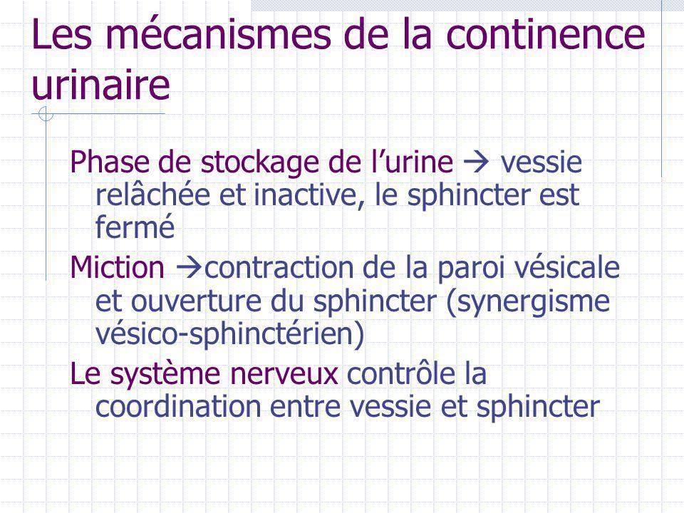 Les mécanismes de la continence urinaire Phase de stockage de l'urine  vessie relâchée et inactive, le sphincter est fermé Miction  contraction de l